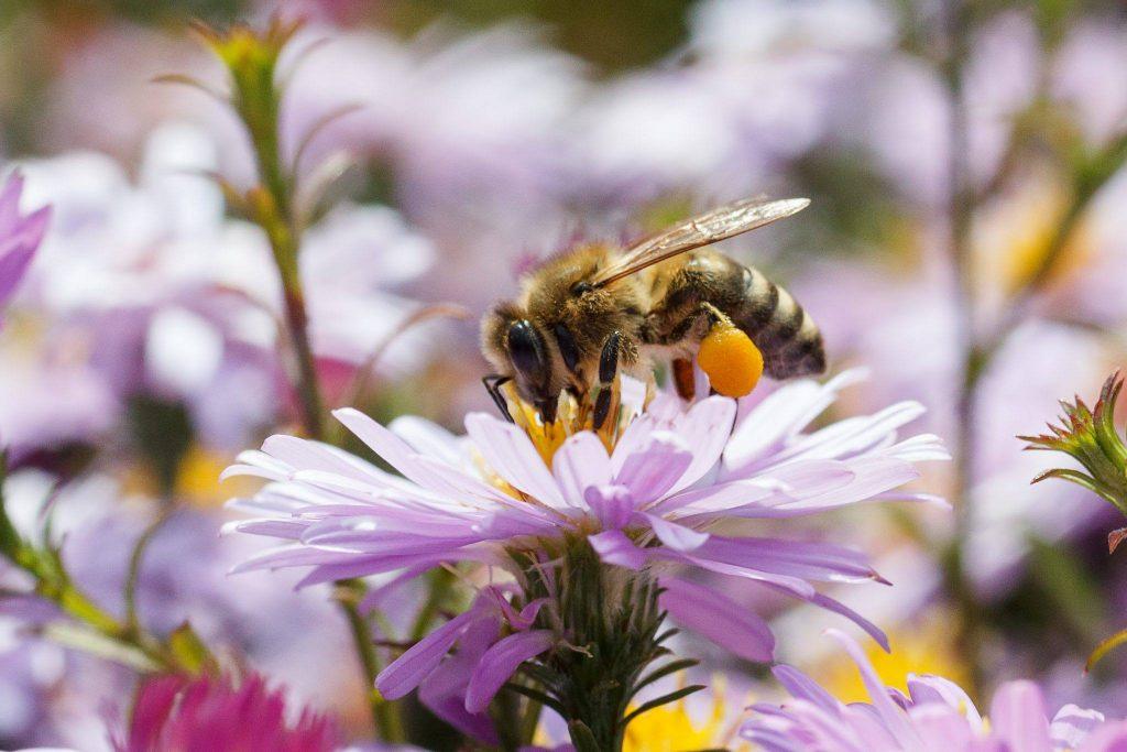 Honey bee on flower in meadow